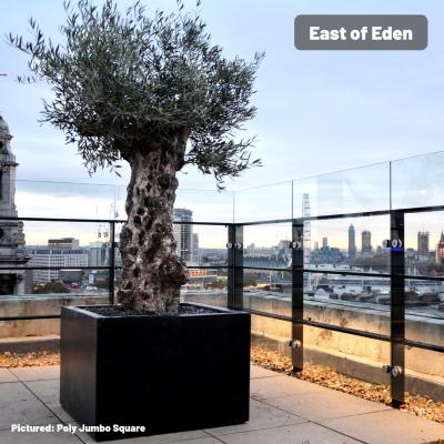 East of Eden.jpg