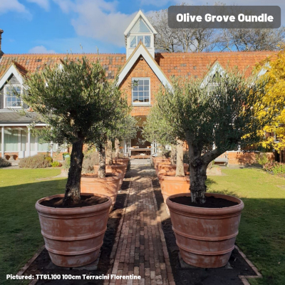Olive Grove Oundle.jpg