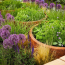 Another #throwback to #RHSChelsea 2018! This time with our Corten Steel Cylinders being featured in @wilkinsonrae 's garden design - 'Space To Grow'! The colours in this garden were eye catching and bright - the contrast between the purple and orange maki
