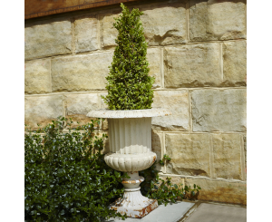 Fluted Venetian Straight Urn Planter
