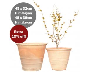 Bulk Buy: Himalayan