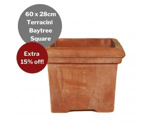 Bulk Buy: Terracini Baytree Square