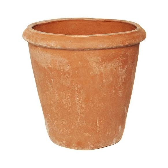 Camelia Pot Image