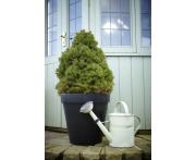 Poly Flower Pot Image