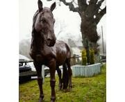 Lifesize Proud Horse Statue Image